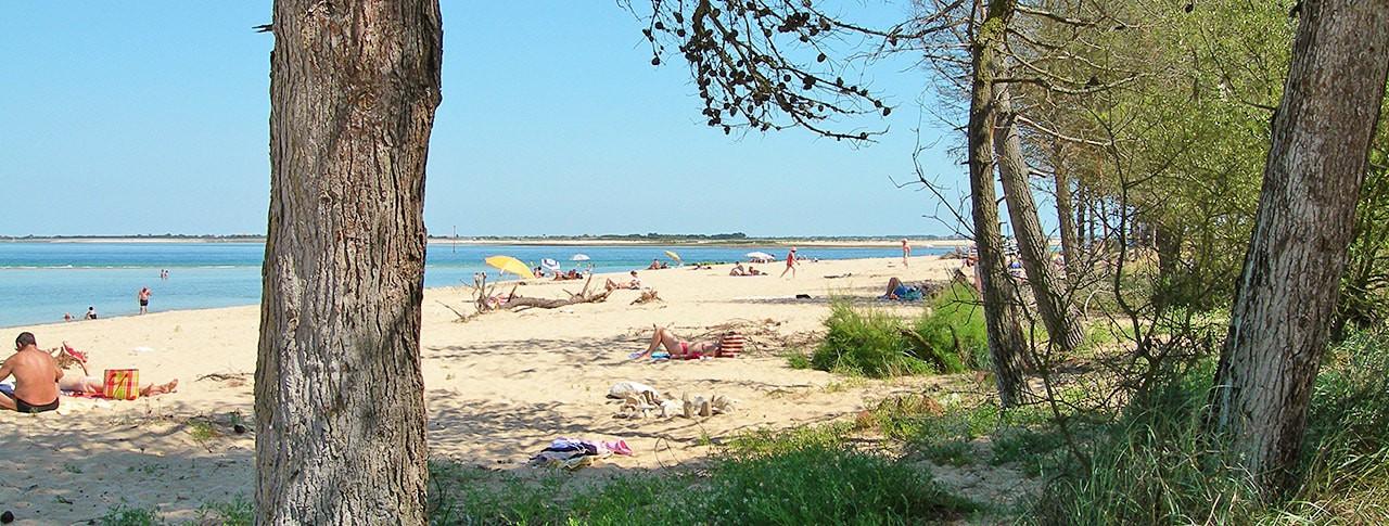 Camping Le Bel Air plage sauvage sur l'ile de Ré