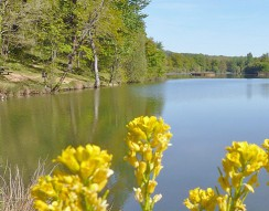 Camping Lac aux Oiseaux
